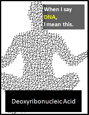 meaning of DNA