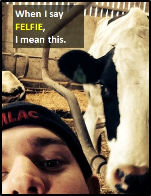 meaning of FELFIE