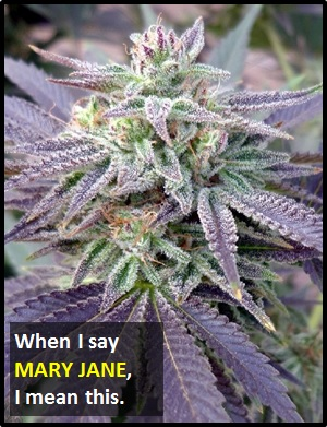 meaning of MARY JANE